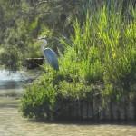 Mai 2014-Camargue-Parc naturel
